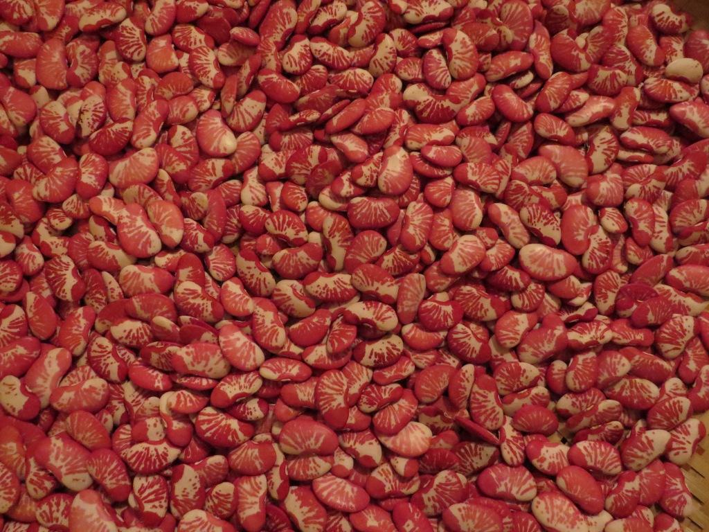 Fava Fava beans
