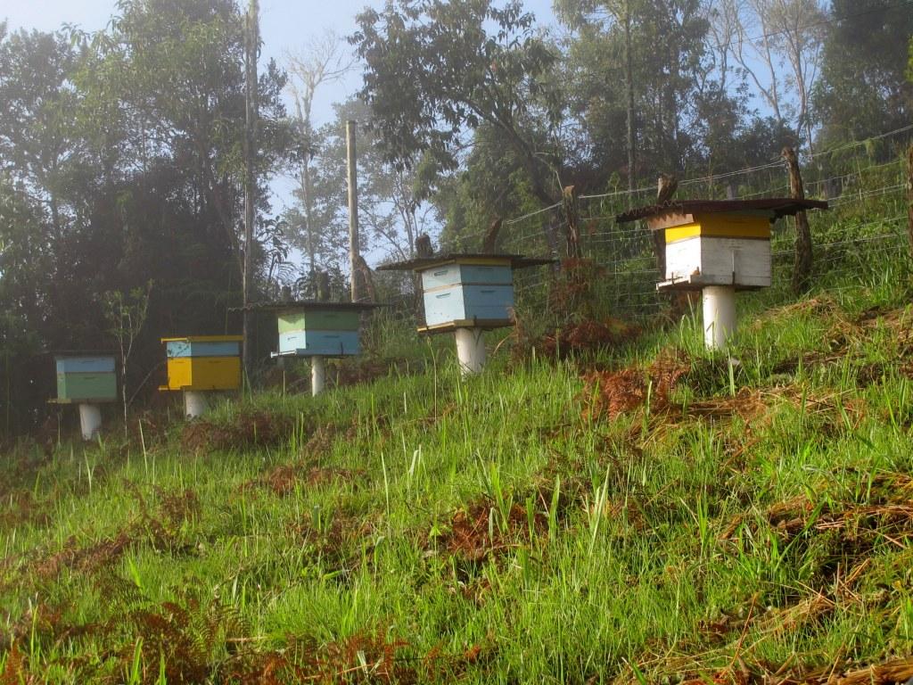 Colméias onde o mel é produzido Our bee hives