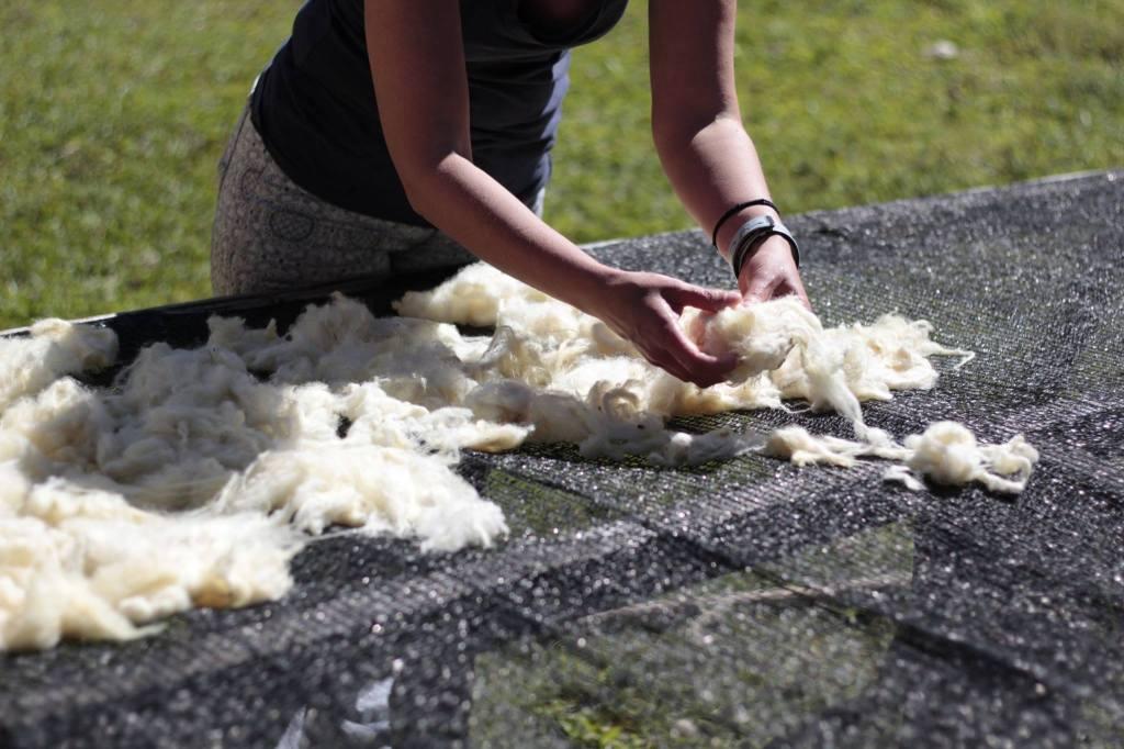 Colocando a lã para secar no jirau / laying wool to dry outside